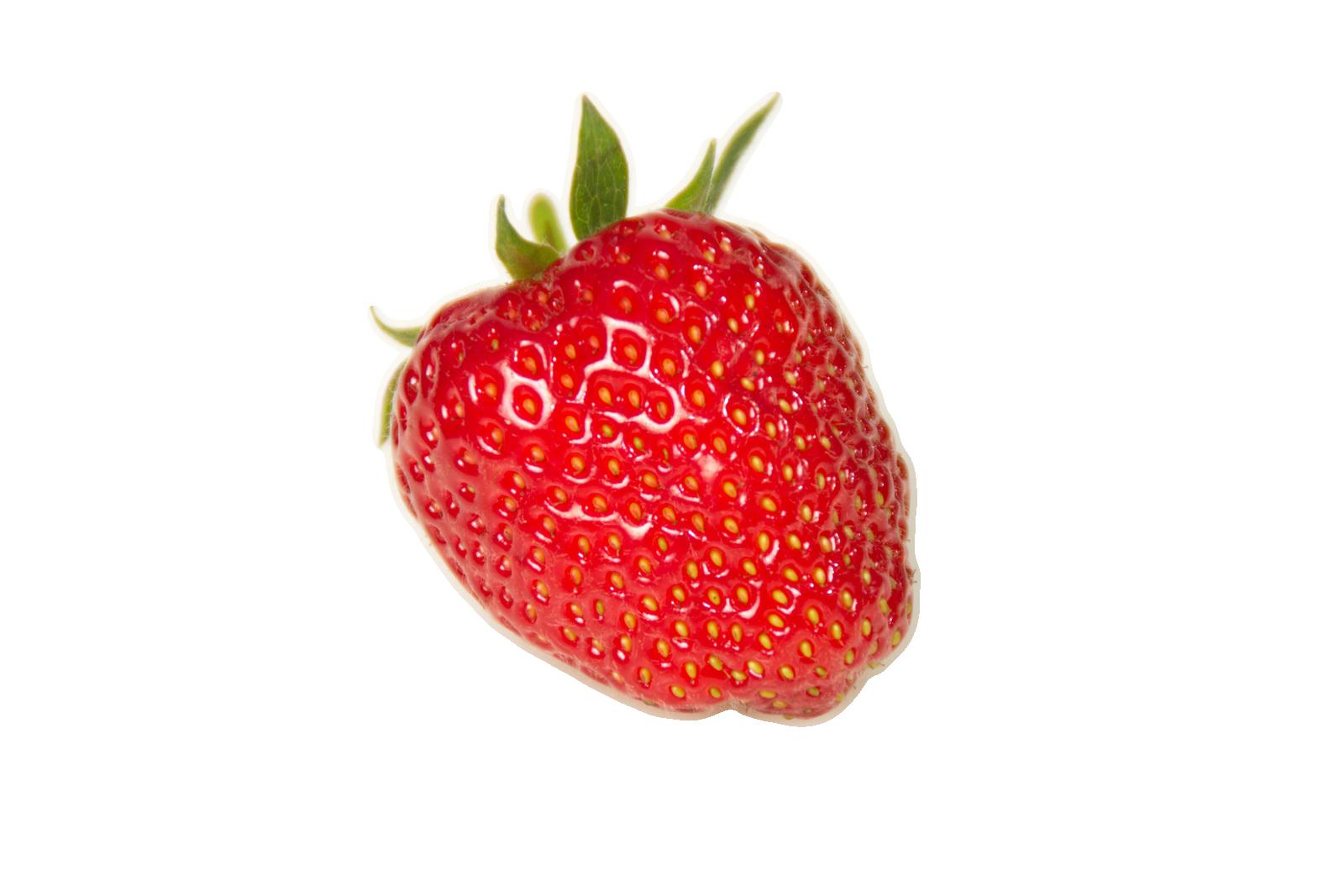 schmid erdbeeren erdbeeren aus dem marchfeld t glich frisch gepfl ckt. Black Bedroom Furniture Sets. Home Design Ideas